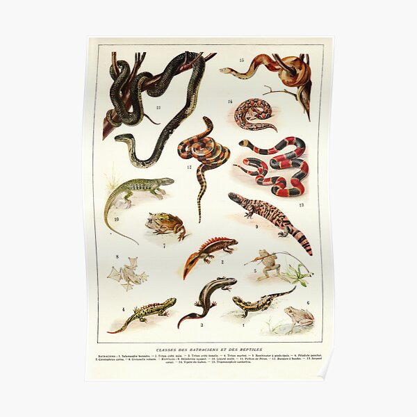 Adolphe Millot - Batraciens et reptiles - French vintage zoology poster Poster