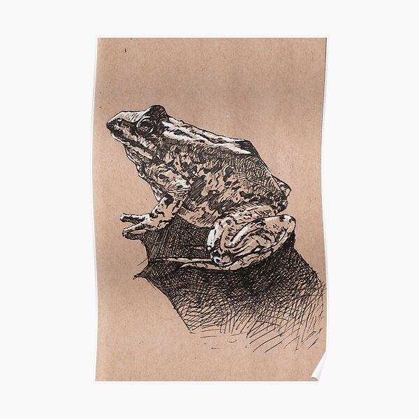 Colombian Spotted Frog Poster