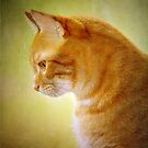 Tabby Cat Portrait by M S Photography/Art