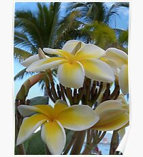 tropical zone - zona tropical Poster