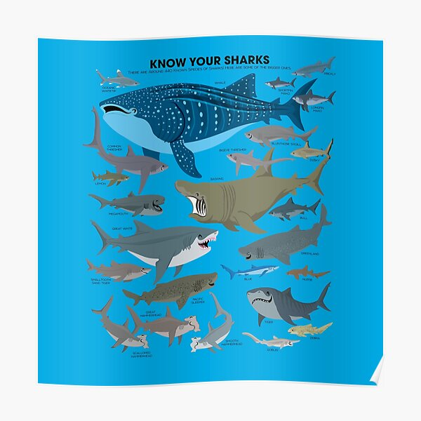 Know Your Sharks Poster