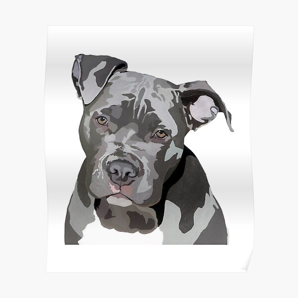 Blue Nose Pit Bull Digital Drawing - Grey Pit Bull - Dog Lovers  Poster