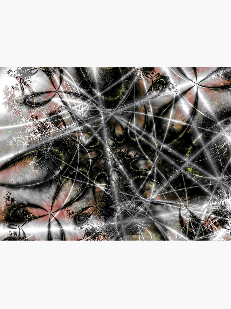 Spider Web by garretbohl