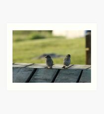 Birds On The Docks Art Print