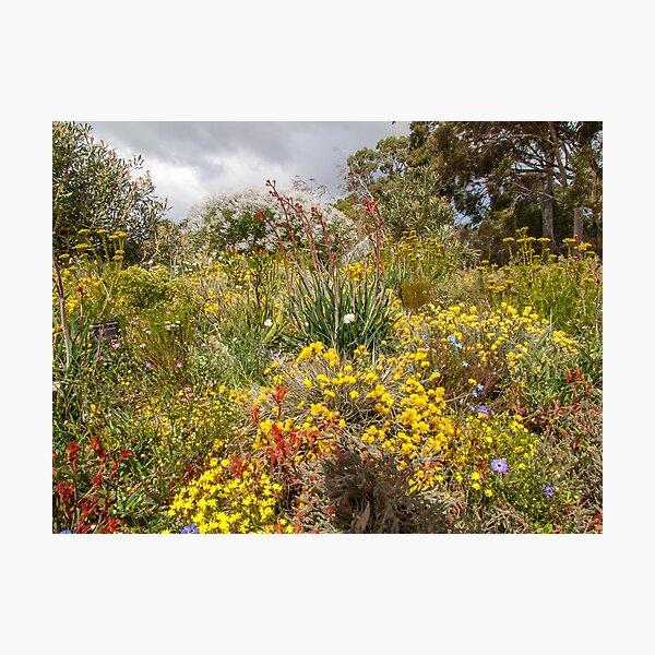 Western Australian Wild flowers Photographic Print