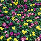 Flower Bed, California, Floral Pattern by Derek Michael Brennan