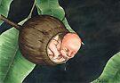 Gumnut Baby by ria gilham