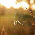 Golden Web by AbigailJoy