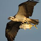Osprey Fishing by WorldDesign