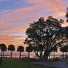 the banyan by cliffordc1