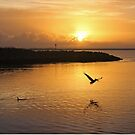 birds at sunrise by cliffordc1