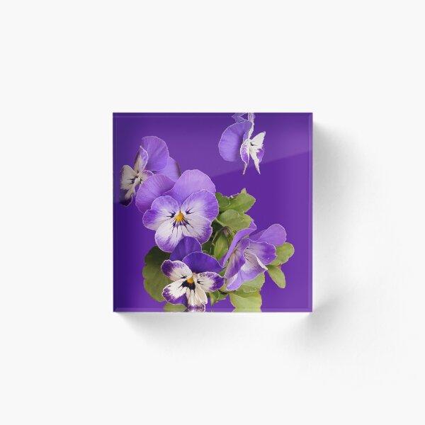 Purple pansies - just for fun Acrylic Block