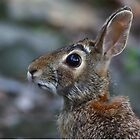 Hare today...gone tomorrow by Jim Cumming