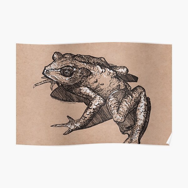 Golden Toad Poster