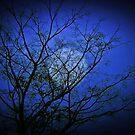 illumine... by Kanages Ramesh