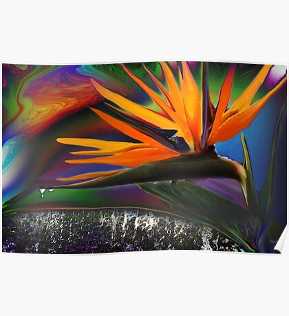 Double headed bird of Paradise Poster