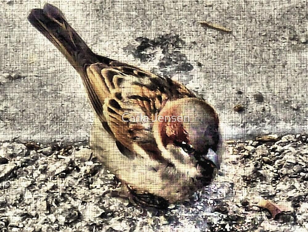 A Little Brown Birdy    by Carla Jensen