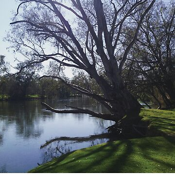 Park in Albury by fhjr2002