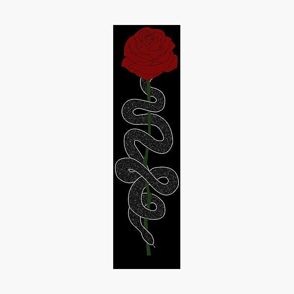 Snake rose (white) Photographic Print