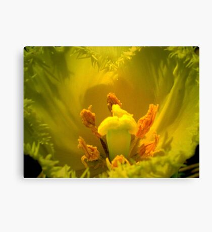 Yellow Tulip Heart Canvas Print