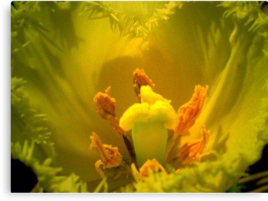 Yellow Tulip Heart by ienemien
