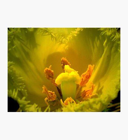 Yellow Tulip Heart Photographic Print