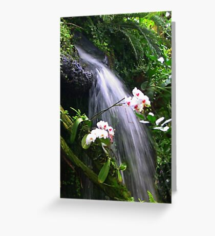 Orchids Waterfall Paradise Greeting Card