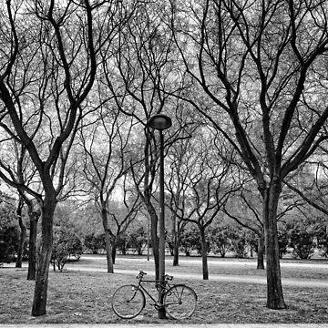 No dejes que la bici te impida ver el bosque by Daniel-PdlP