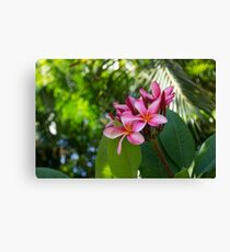Tropical Paradise - Fragrant, Hot Pink Plumeria in a Lush Garden Canvas Print