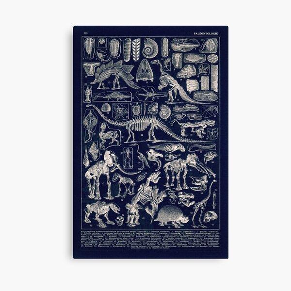 Adolphe Millot - Paleontologie (paleontology)- vintage french poster Canvas Print