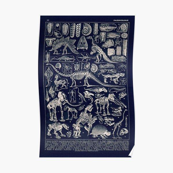 Adolphe Millot - Paleontologie (paleontology)- vintage french poster Poster