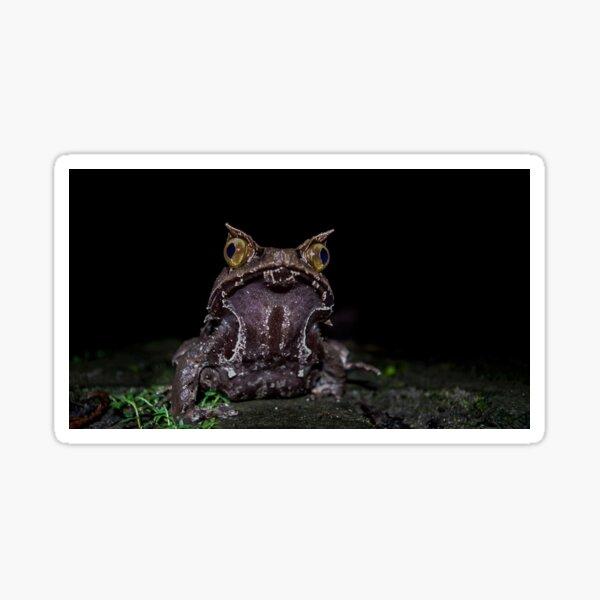 Kobayashi's Horned Frog Sticker