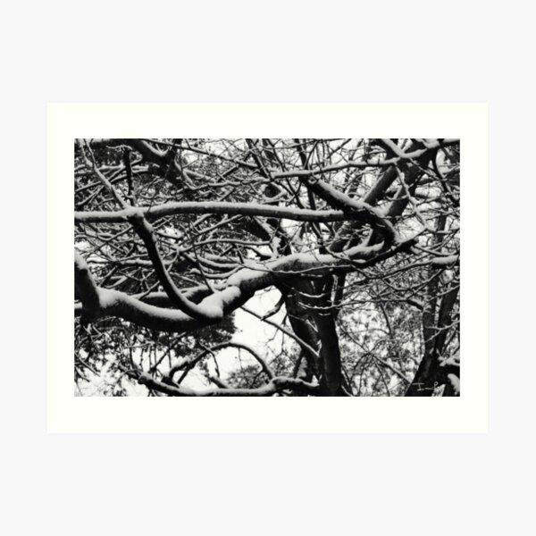 Snow on Branches Art Print