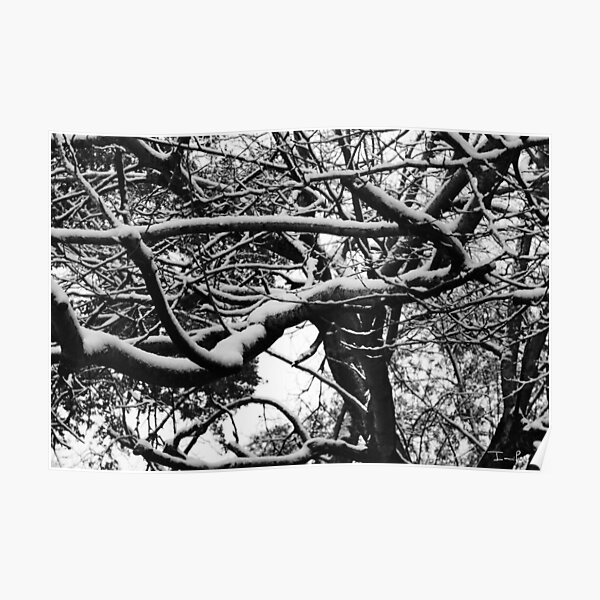 Snow on Branches Poster