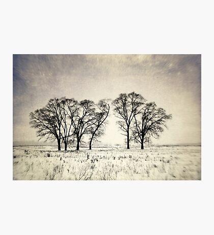 Dark Winter Days Photographic Print