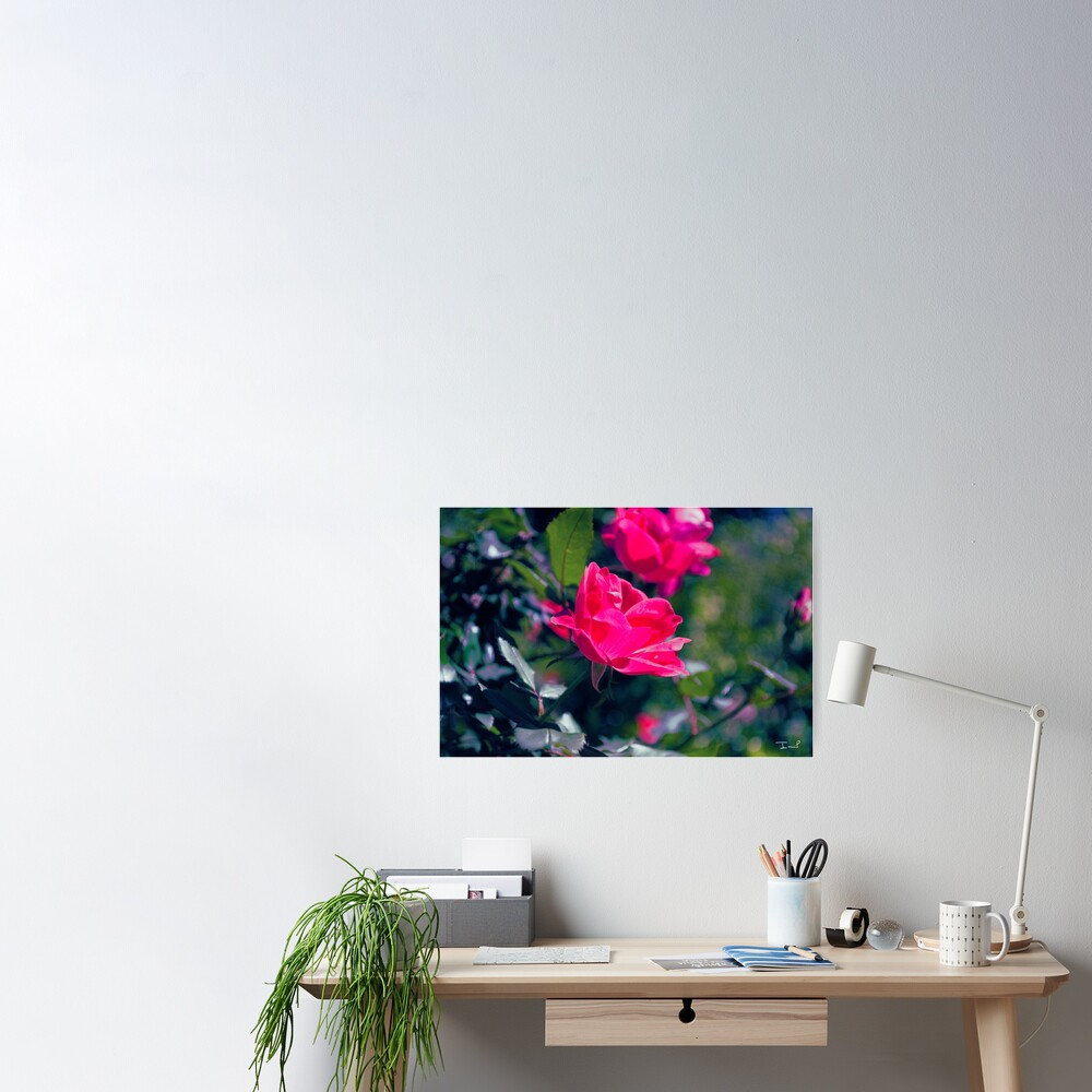 Roses and Leaves Poster