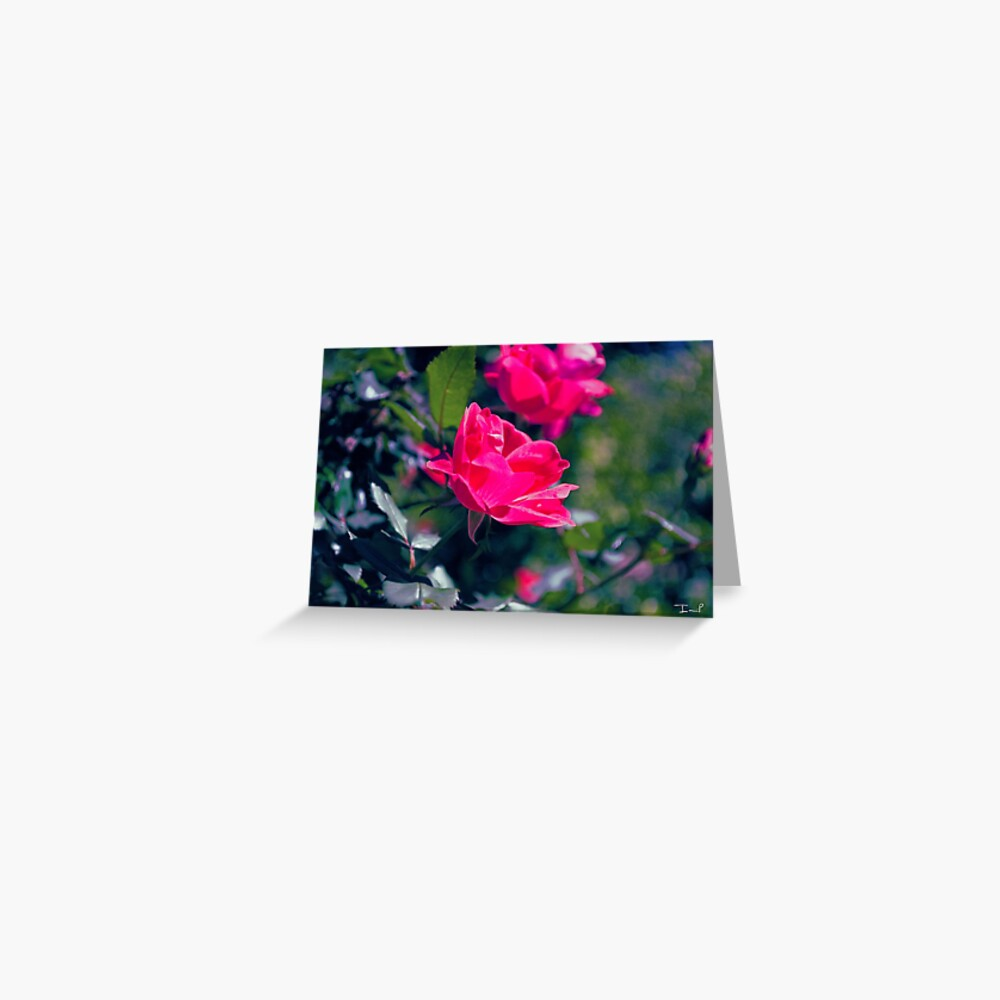 Roses and Leaves Greeting Card