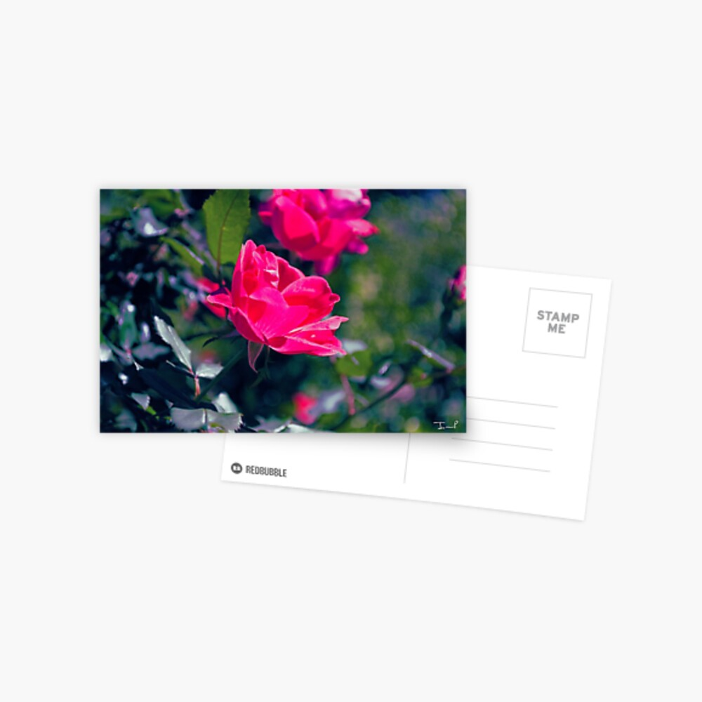 Roses and Leaves Postcard