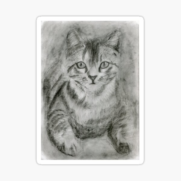 Realistic Cat Drawing Art - Black and White Cat (gift for cat lovers) Sticker