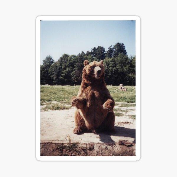 Sitting Bear Sticker