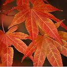 Autumn Leaves by Matthew Folley