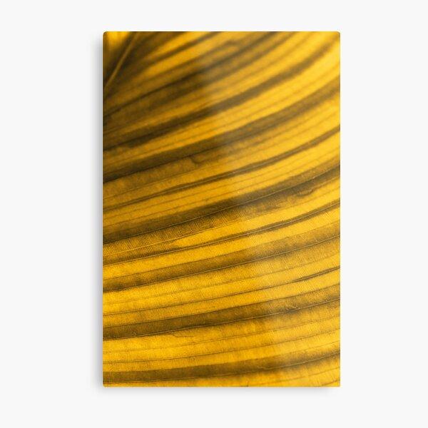 Golden Leaf II Metal Print