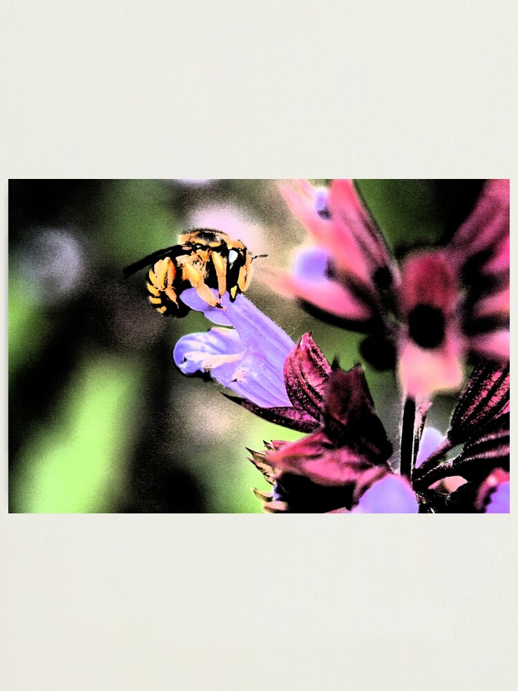 Alternate view of Bee and Flower Photographic Print