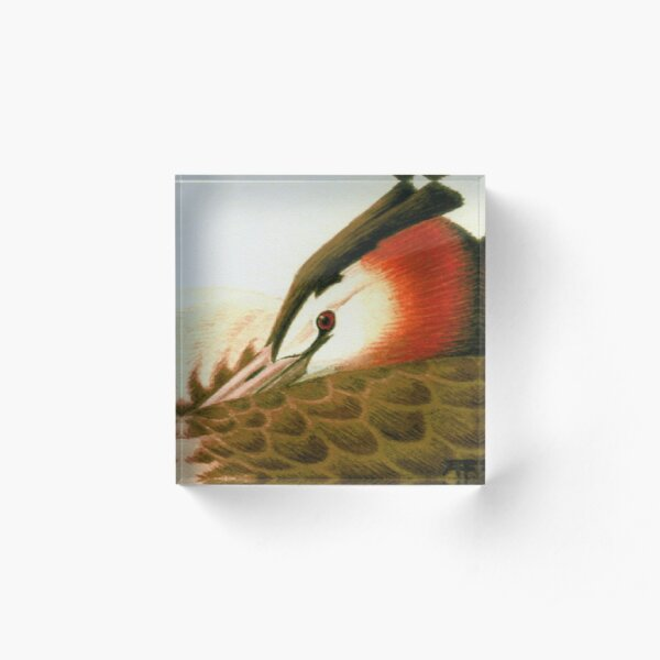 Great Crested Grebe Acrylic Block