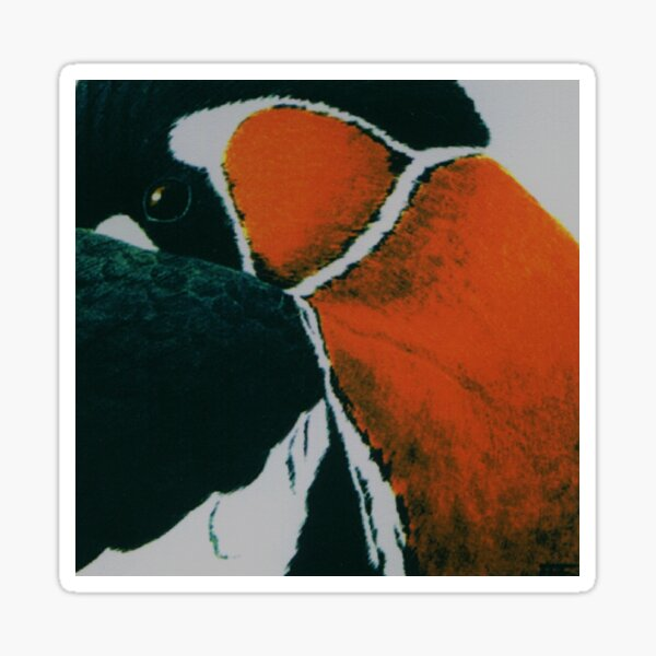 Red-breasted goose Sticker