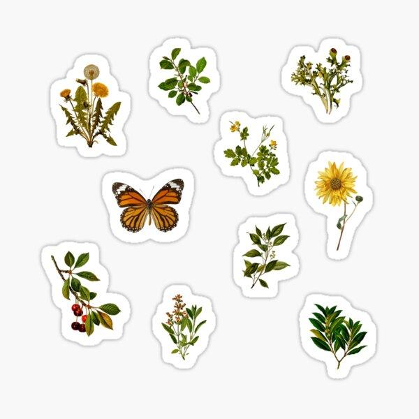 Vintage Botanical pack 3 Sticker