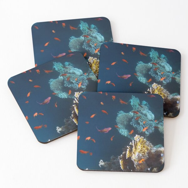 Colorful and Beautiful Sealife photography Coasters (Set of 4)