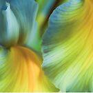 Iris Fantasy by Colleen Farrell