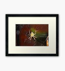 Unique Spider Design Framed Print