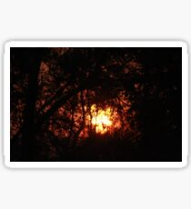 Fiery Sunset Through The Eucalypts Sticker